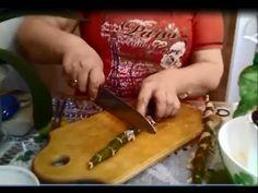 Орхидея Дендробиум! Размножаем черенками! Легко и просто! - YouTube