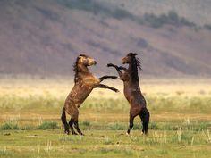 BANCO DE IMÁGENES: 28 fotos de caballos en paisajes fascinantes con verdes praderas, lagos, ríos y bosques...