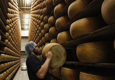 An employee stacks a wheel of cheese on the storage shelves at a diary plant in Litovel, one of the world's biggest producer of traditionally made parmesan cheese, June 27, 2012. REUTERS-Petr Josek