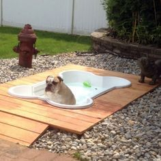 Doggy deck with an inground pool. Perfect for a backyard pet area. Doggy deck with an inground pool. Perfect for a backyard pet area. My Pool, Pool Fun, Dog Life, My Dream Home, Your Dog, Outdoor Living, Dog Cat, Pet Pet, Cute Animals
