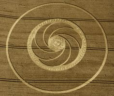 Crop Circle at Milk Hill (2), nr Stanton St Bernard, Wiltshire. Reported 5th August 2012.