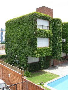 Vine house. Punta del Este. Uruguay