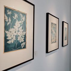 I love these beautiful cyanotypes by Anna Atkins #photography #nature #natureinthehome #natureinart #colourhunting #pastelsquares #calm #pretty