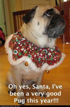 Christmas pug...i love him