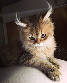 Love Cute Animals shares pics of playful animals, cute baby animals, dogs that stay cute, cute cats and kittens and funny animal images. Silly Cats, Funny Kittens, Cute Cats And Kittens, Baby Cats, Cool Cats, Kittens Cutest, Baby Kitty, Munchkin Kitten, Beautiful Cats