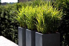 16 nejlepších obrázků z nástěnky modern garden style vegetable