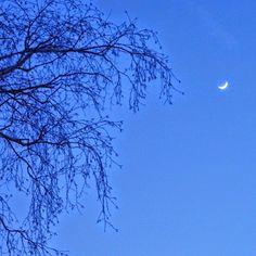 #nofilter #nofilterneeded #blue #bluesky #tree #silhouette #crescentmoon #moon #night #winter #brantford #Ontario #Canada #brantcounty