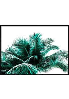 Emerald Coconut Leaves Landscape Tropical Posters, Coconut Leaves, Plant Leaves, Emerald, Landscape, Beach, Plants, Scenery, The Beach