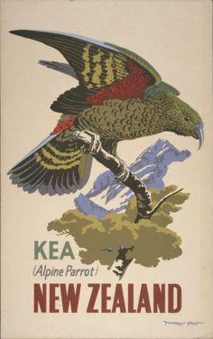 New Zealand Kea Alpine Parrot Bird Vintage Travel Advertisement Art Poster New Zealand Art, New Zealand Travel, Retro Poster, Poster Vintage, Tourism Poster, Nz Art, Bird Poster, Kunst Poster, Kiwiana