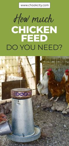 Chicken feed should meet all the nutritional requirements of your flock. If you are confused about what to feed chickens, then this guide will answer all your questions about healthy and complete chicken feed What Can Chickens Eat, Raising Backyard Chickens, Keeping Chickens, Chicken Facts, Chicken Life, Canned Chicken, Organic Chicken Feed, Raising Quail, Chicken Eating