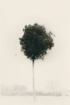 Masao Yamamoto Beautiful, haunting black and white photograph of a lone tree in the snow
