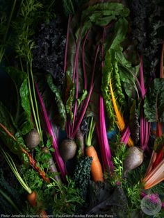 British photographer Jonathan Gregson won in the Production Paradise Food off the Press category for this beautiful image of vegetables, which graced the cover of Waitrose Food magazine in January Waitrose Food, Dark Food Photography, Photography Lessons, Photography Awards, Food Program, Still Life Photographers, Root Vegetables, Veggies, Greens Recipe