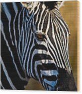 Zebra Wood Print Plains Zebra, Wood Print, Fine Art America, Van, Prints, Vans, Vans Outfit