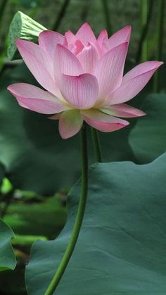 "Dementia is horrible! | Okayama Kanban ""Believe - Spiritual Healing of Love to be Happy"""
