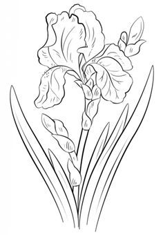 How to draw an iris flower step by step. Drawing tutorials for kids and beginner. - Garden Style - How to draw an iris flower step by step. Iris Drawing, Plant Drawing, Drawing Sketches, Drawing Flowers, Flower Drawings, Colour Drawing, Floral Drawing, Drawing Skills, Drawing Reference