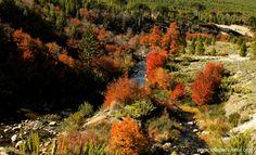 la magia y los colores de #otoño en #VillaPehuenia y #Moquehue www.villapehuenia.org