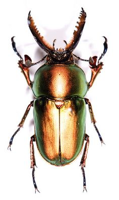 Insect specimen | Flickr - Photo Sharing!