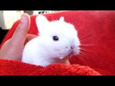 Cute Animal Videos Compilation 2015 | See more funny and cute animal videos here http://gwyl.io/