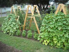 Tomato Ladders & Cucumber Trellis wow this is neat and easy Ladders! Of C Tomato Ladders & Cucumber Potager Garden, Veg Garden, Edible Garden, Summer Garden, Garden Landscaping, Veggie Gardens, Easy Garden, Vegetable Gardening, Trellis Design