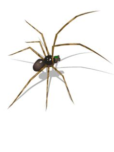 Download Spider Mobile Screensavers for your cell phone