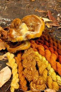 A favorite mushroom to use for golden yellow dye