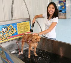 Instead of the groomer, take your dog to a dog wash and DYI