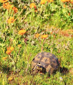 Wheretostay Namibia: Travel Planner & Routes into Namibia Travel Planner, Cape Town, Bed And Breakfast, Lodges, Wild Flowers, Safari, Turtle, Trips, Seasons