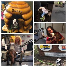 Porkie had a very exciting day at @b1015fm! Our 10 year anniversary is one month away and Kristin Nash is helping us get the word out! #10yearanniversary #lovefxbg #buzzybee #b1015fm #grandmalucys