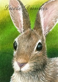 pics of Lucie Dumas' art | Art print 5x7 from painting Hare 12 rabbit by Lucie Dumas | ArtbyLucie ...