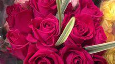 Resultado de imagem para buque de rosas de todas as cores