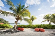 Seychelles Wedding - Maia Luxury Resort - Jack and Jane Photography Seychelles Wedding, Wedding Photography, Luxury, Outdoor Decor, Wedding Photos, Wedding Pictures