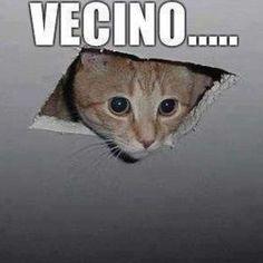 Memes de gatos: lo más viral, tierno y peludo de la red
