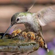 Living Water Landscape Service added a new photo. Animals And Pets, Funny Animals, Cute Animals, Funny Birds, Beautiful Birds, Animals Beautiful, I Love Bees, Natural Swimming Pools, Mundo Animal
