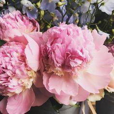 In love with this peony 'Angel Cheeks' and smells devine #lifeinflowers #peonies #smelltheflowers #petalsandblooms #flowershoplife #summerflowers