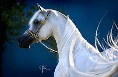 Nice white