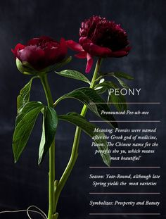 Flower Glossary: Peony - Design*Sponge Peonies good Feng Shui flowers for the home - symbol for wealth, good fortune, health, happiness and prosperity Arrangements Ikebana, Flower Arrangements, My Flower, Beautiful Flowers, Birth Flower, Anemone Flower, Flower Meanings, Language Of Flowers, Dream Garden