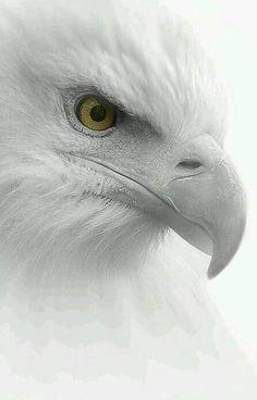 Love Eagle