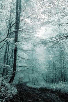 forest|Paul Photospec