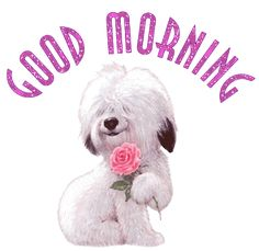 Good Morning Shaggy Dog With a Pink Rose