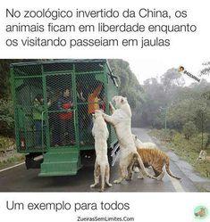 Assim deveria ser os zoológicos