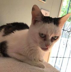 Cats face meme 45 new Ideas Funny Animal Jokes, Cute Funny Animals, Animal Memes, Cute Baby Animals, Funny Cat Faces, Funny Cats, Meme Faces, Kittens Cutest, Cats And Kittens