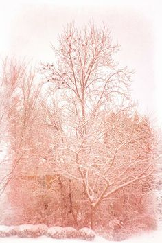 Pink Snow Sunset print by Suzanne Powers, $22.00
