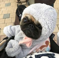 Products Stunning hand crafted pug accessories and jewelery available at Paws Passion Shop! Show your pug puppy how much you love them by wearing our merchandise! Cute Pugs, Cute Dogs And Puppies, Cute Funny Animals, Cute Baby Animals, Doggies, Bulldog Puppies, Terrier Puppies, Funny Pugs, Lab Puppies