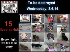 15 precious lives are on the list tonight. Please don't let tonight be their last. Share their story everywhere to help them have a future. To rescue a Death Row Dog, Please read this: http://urgentpetsondeathrow.org/must-read/  To view the full album, please click here:  https://www.facebook.com/media/set/?set=a.611290788883804.1073741851.152876678058553&type=3