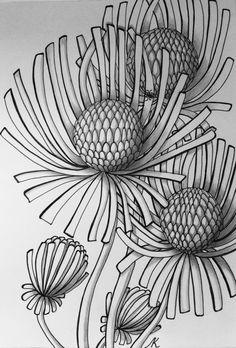 Zentangle, flowers