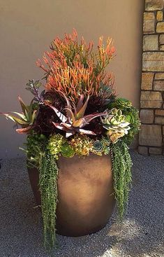 I love this beautiful arrangement of succulent plants with contrasting colors and forms.