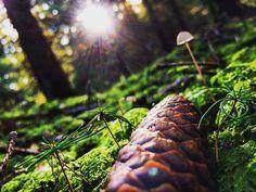 One with nature [2]  _ _ _ _ _ #grafinesse #picturesque #nature #one #gegenlicht #naturelovers #naturpur #forest #bwood #schwammerljagd #stillalive #herbst #atumn #potd
