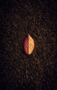 samsung wallpaper fall pls me # # pls me # Android Wallpaper 4k, Abstract Iphone Wallpaper, Wall Art Wallpaper, Fall Wallpaper, 1080p Wallpaper, Mobile Wallpaper, Travel Wallpaper, Screen Wallpaper, Beautiful Flowers Wallpapers