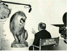 米 高 梅 電 影 公 司 LOGO那 個 怒 吼 的 獅 子 就 是 由 希 區 柯 克 拍 攝 的, 而 且 獅 子 是 真 獅 子, 若 放 在 今 天 肯 定 是 電 腦 製 作 了。