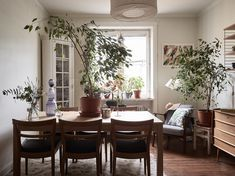 Living space with plants